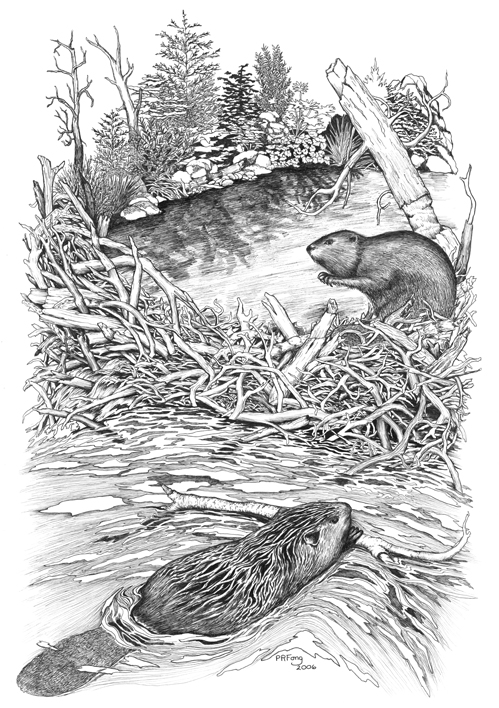 "Beaver (12"" x 18"")"