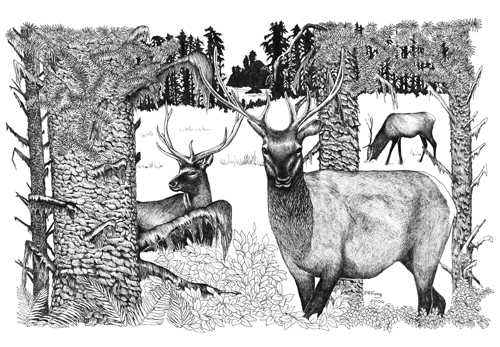 "Roosevelt Elk (18"" x 12"")"