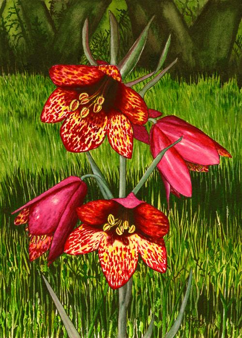 """Fritillaria (7"""" x 9.75"""")"""