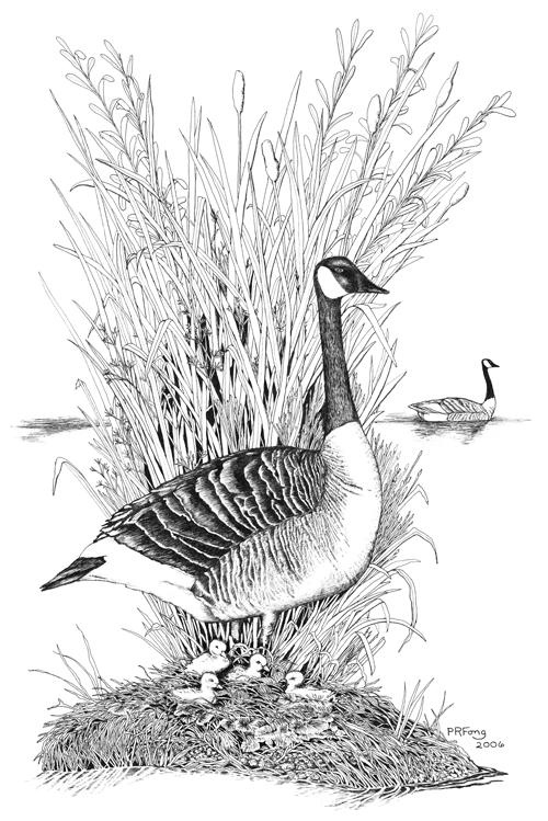 """Canada Goose (12"""" x 18"""")"""