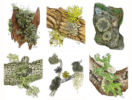 Lichen Note Cards (6)