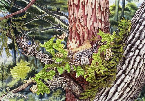 """Lichen & Moss (18"""" x 12.5"""")"""