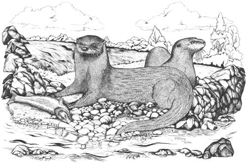 """River Otter (18"""" x 12.5"""")"""