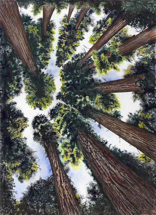 "Coastal Redwood Canopy (16"" x 22"")"