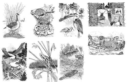 Wildlife Note Card Set (8 cards)